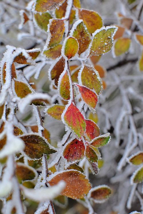 4.kolory jesieni_girlwithoneeye
